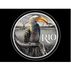 R10 SOUTHERN YELLOW-BILLED HORNBILL